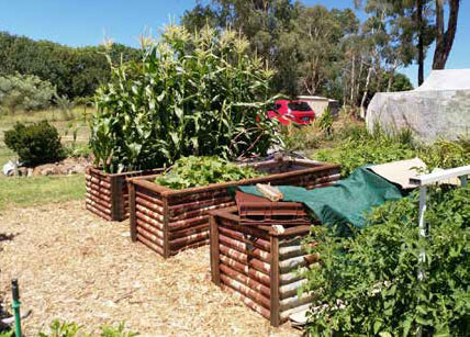 Raised garden beds at BCG made from recycled materials. Photo: Jo Kirwan