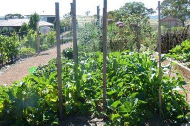 Dickson Garden