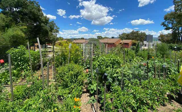 Erindale Community Garden