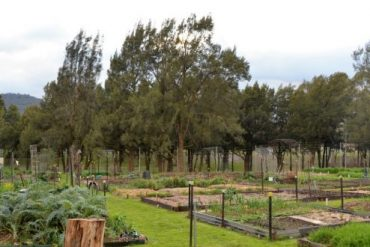 Betty Cornhill Garden