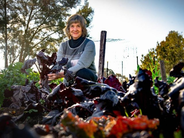 Shirley Bolton of Oxley with her community garden-grown beetroot. Picture: Elesa Kurtz